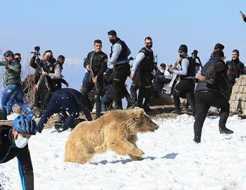 медведь набросился на толпу людей