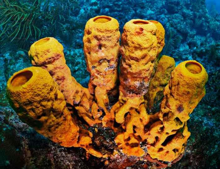 питание морских губок