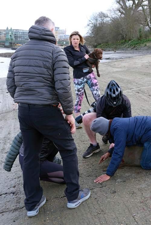 раненый тюлень из-за собаки