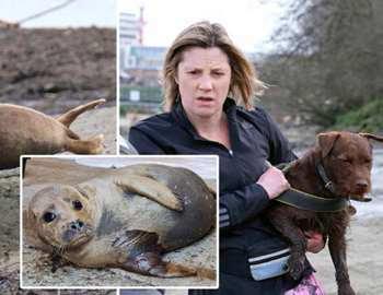 собака напала на тюленя