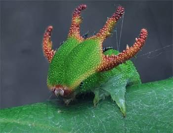 выживание среди насекомых