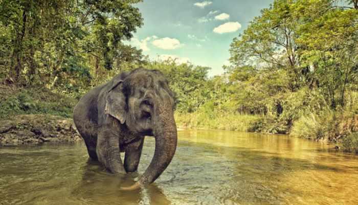 слон на водопое