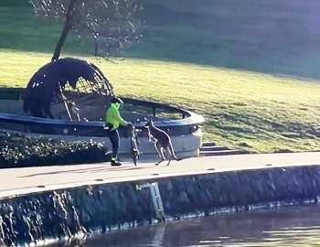 кенгуру и велосипедист